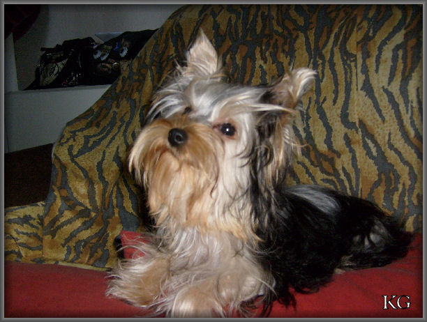 http://empia.cowblog.fr/images/FOXYMAISONDE2MOIS12a6mois/2307BIS.jpg