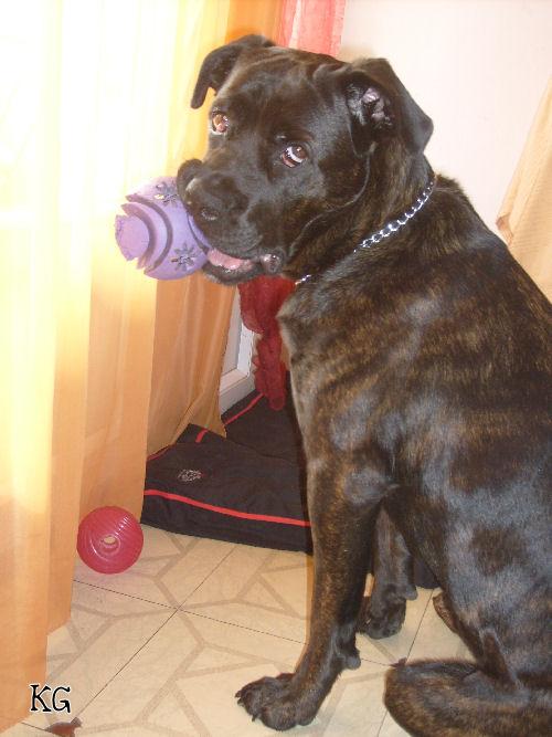 http://empia.cowblog.fr/images/PhotosEmpiade11a18mois/S6303060.jpg
